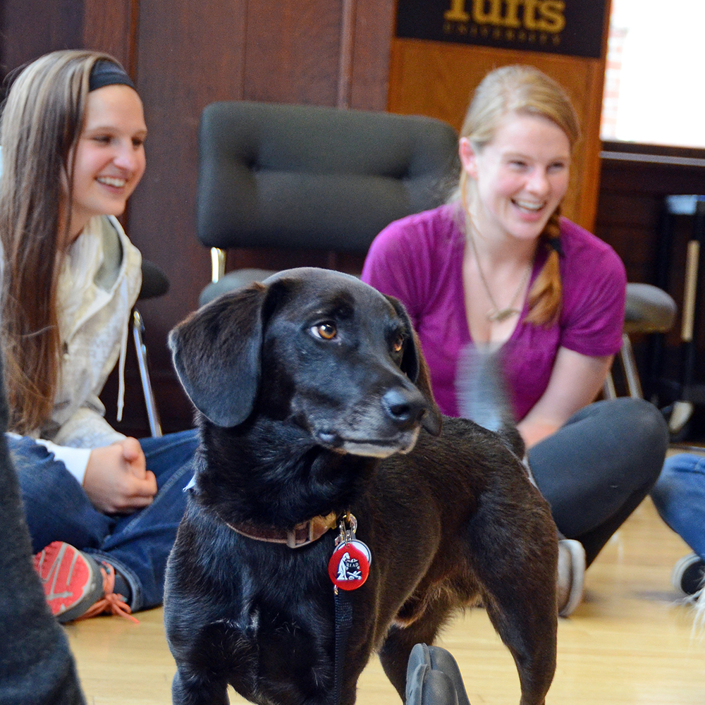 students sitting on the floor with a black service dog