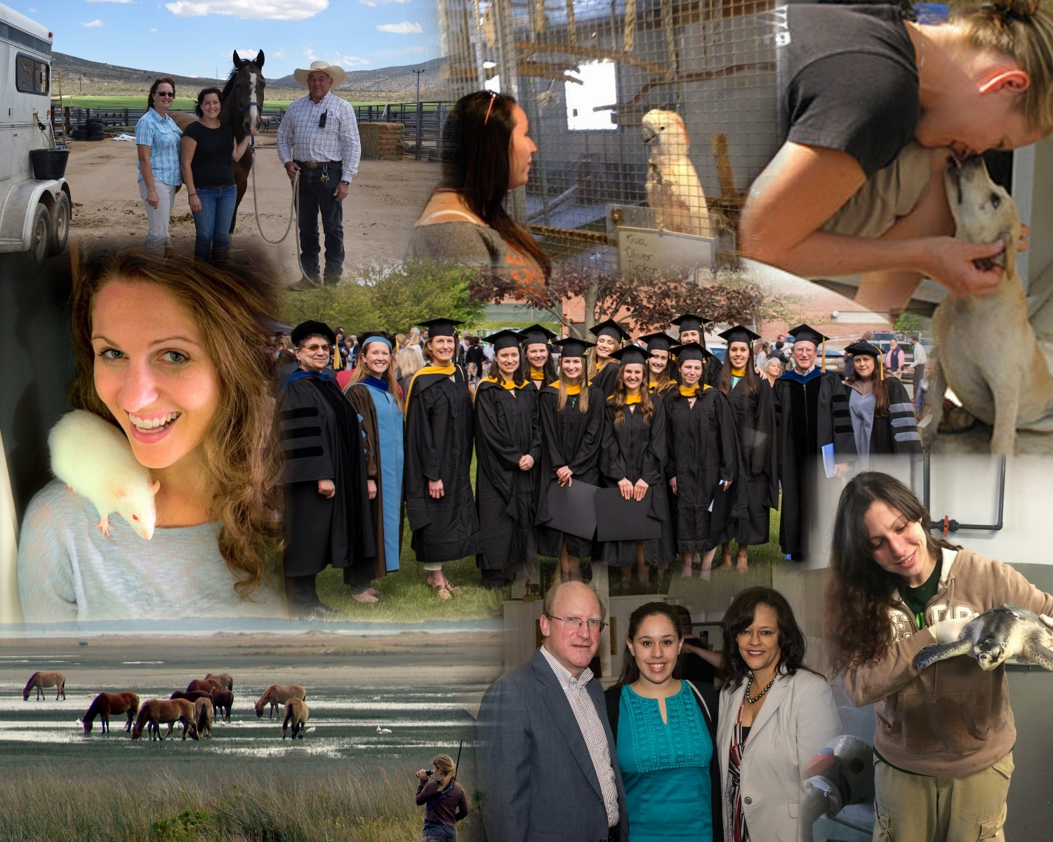 MS in Animals and Public Policy photos collage