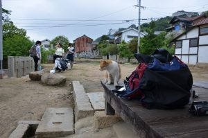 Ota_Stephany-and-some-other-students-collecting-and-cleaning-up-cat-feces-300x199