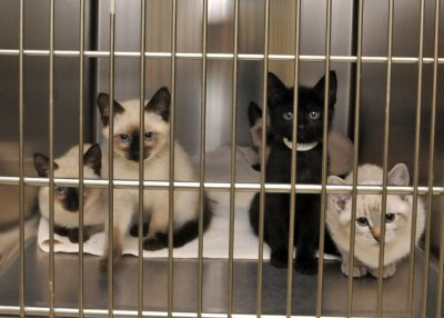 Cats at Lerner Spay/Neuter Clinic